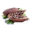 Saveurs cacao