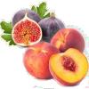 Saveurs fruits à jus