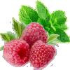 Saveurs végétal – fruits rouges